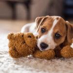 ¿Sabrías practicarle los primeros auxilios a tu perro?