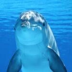 ¿Se puede medir la felicidad de los delfines?