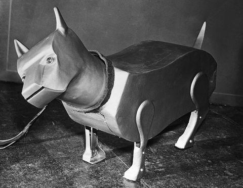 Revelan que la CIA quiso crear perros dirigidos por control remoto