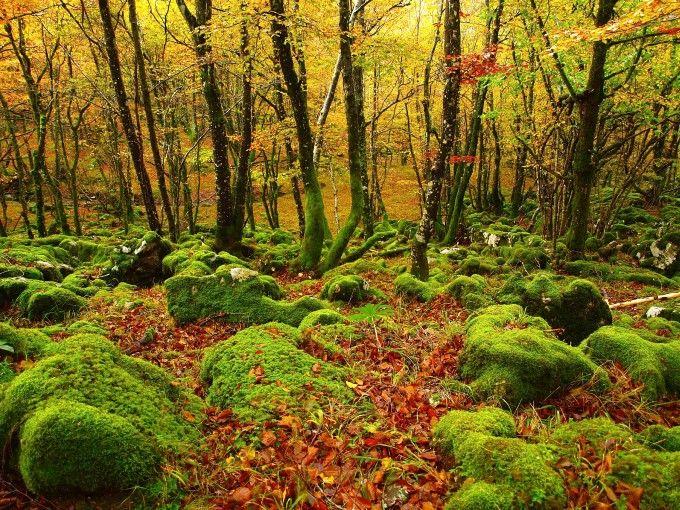 Tala ilegal de bosques
