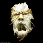 10 inquietantes retratos hechos con frutas e insectos