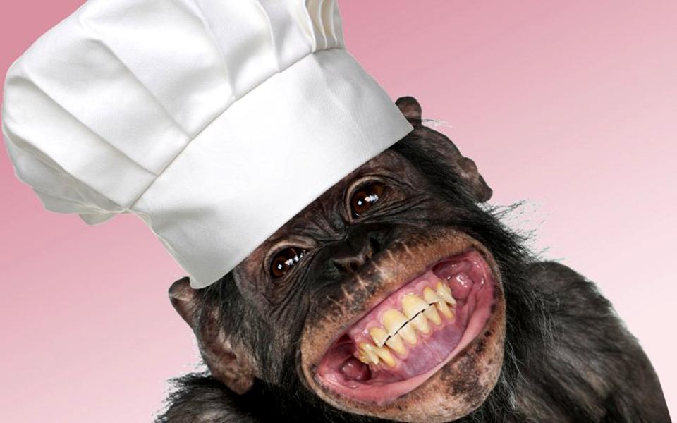 Top Chef chimpancé