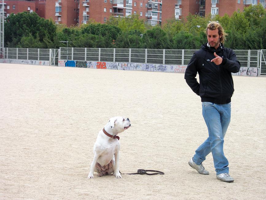 Trucos para educar a tu perro