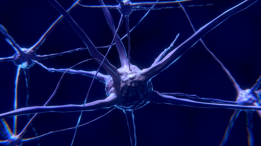 """Tu cerebro tiene un sistema de """"urgencias neuronales"""". Y funciona así"""
