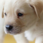 Un caso extraño: una mujer muere por un pellizco de un cachorro