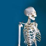 Construir un esqueleto de papel: ¿te atreves con el reto?