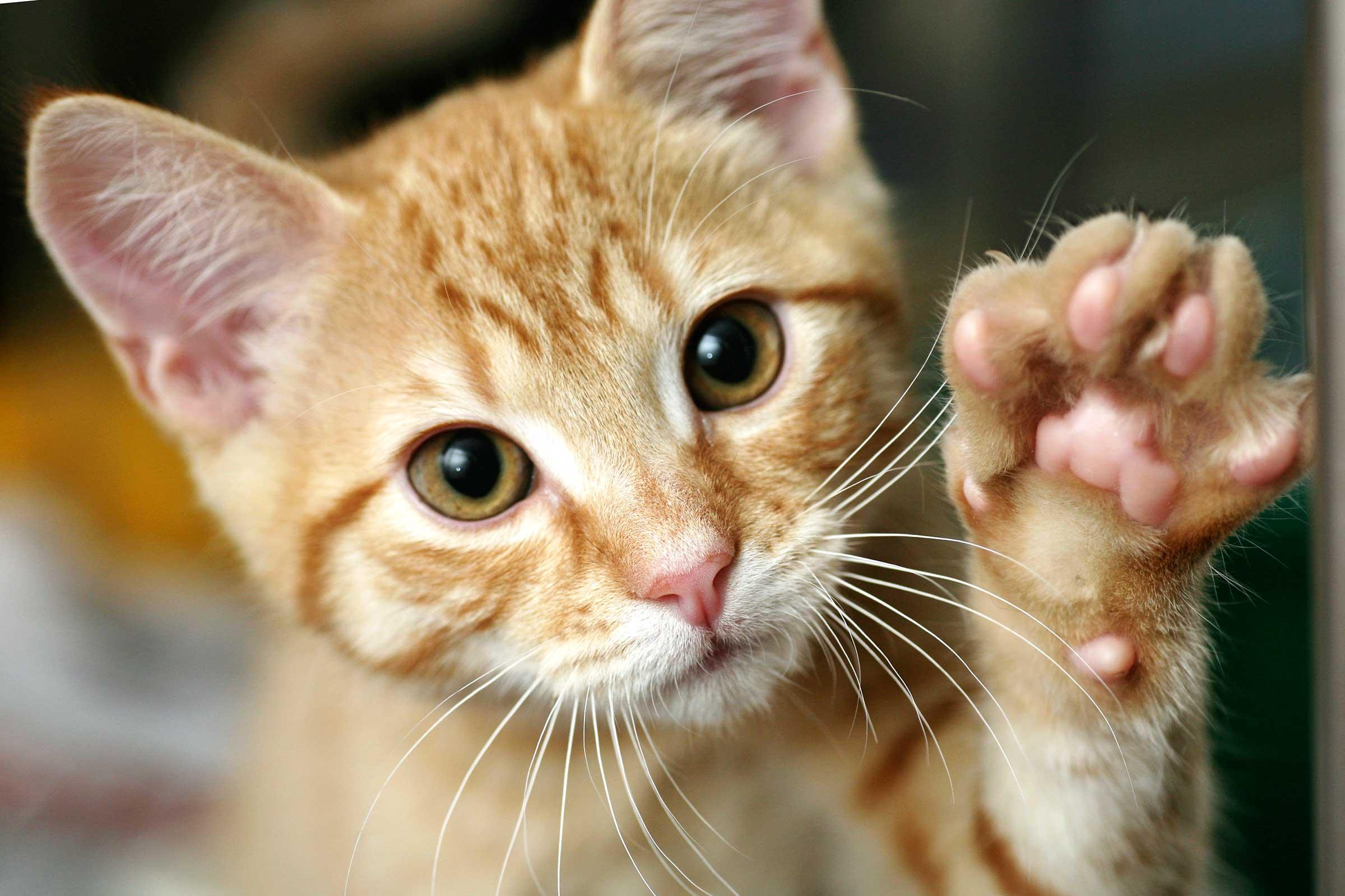 Un estudio confirma que los gatos no son tan pasotas como creíamos