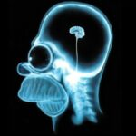 Un gen limita la inteligencia