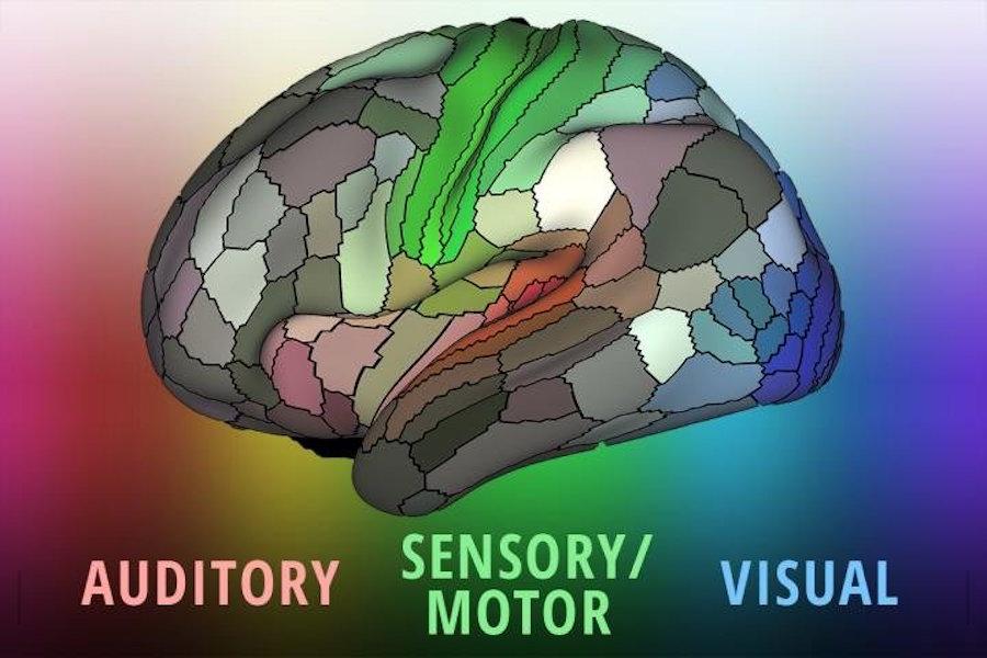 Un nuevo mapa del cerebro identifica casi 100 áreas desconocidas