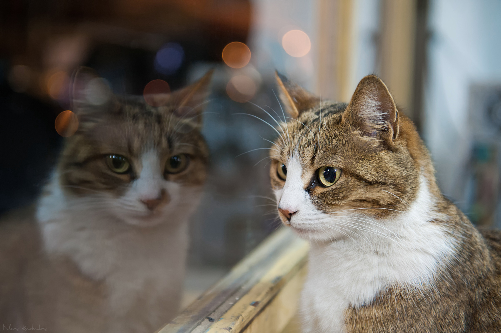 Un parásito de los gatos afecta al aprendizaje infantil