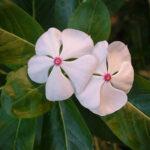 Una flor que cura