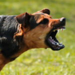 Una naturópata trata a un niño con un producto que dicen que contiene saliva de perro rabioso