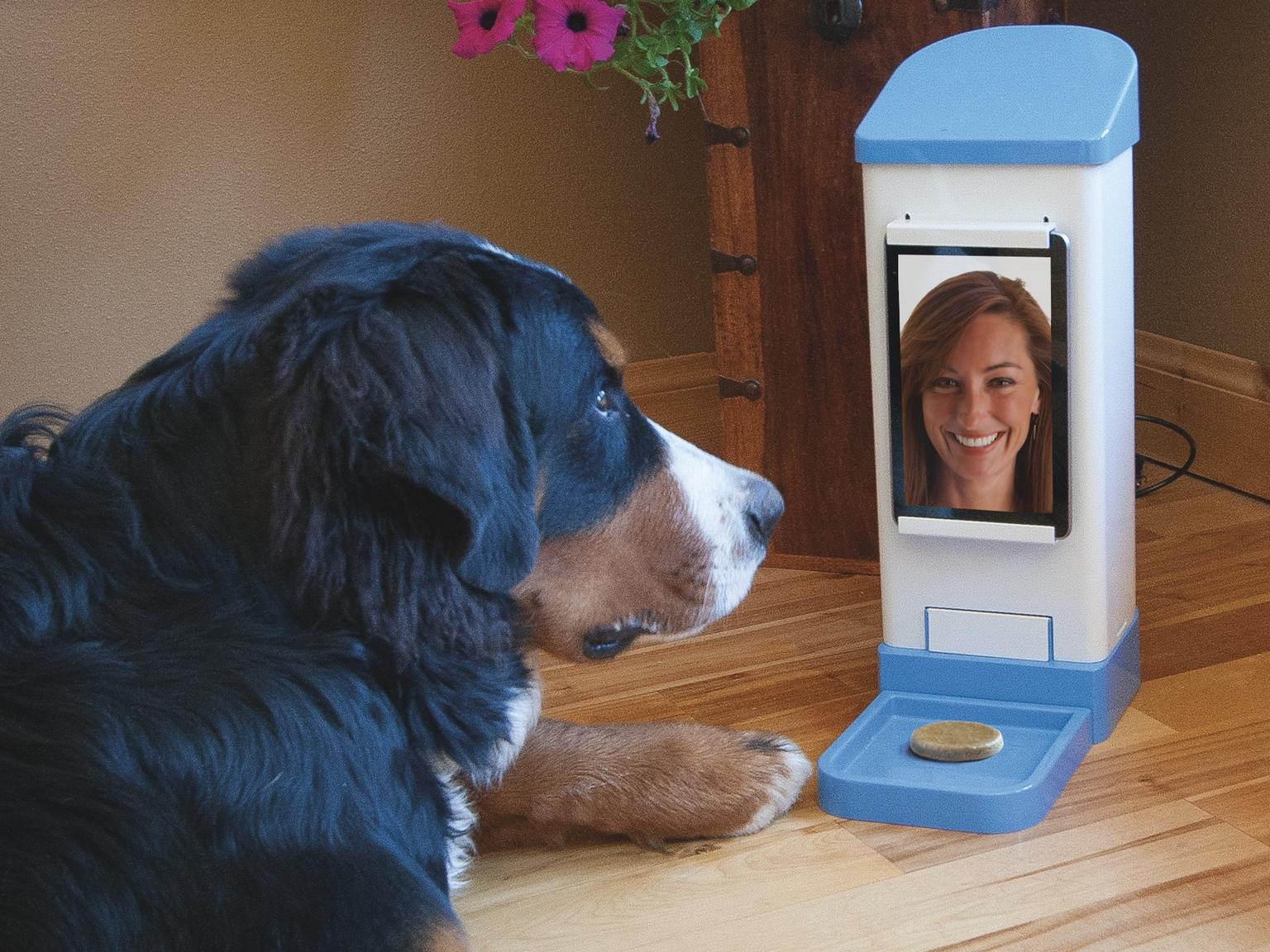 Una niña de 15 años inventa un sistema para 'chatear' con nuestras mascotas