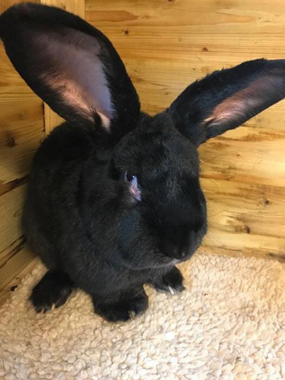 United Airlines mata a un conejo gigante propiedad de Jessica Rabbit