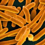 Usan CRISPR para convertir una bacteria en una «memoria genética»