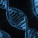 Usan CRISPR para detectar mutaciones en el ADN