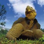 Viaje de Darwin a las Galápagos: Juan Luis Arsuaga