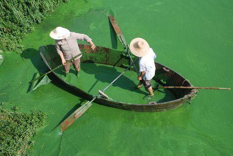 El verde de los lagos no siempre es bueno