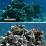 El algoritmo que revoluciona la fotografía submarina