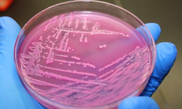Cambio climático: ¿es esta la bacteria que estábamos esperando?