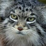 ¿Podemos aprender a leer las expresiones de los gatos? La ciencia dice que sí