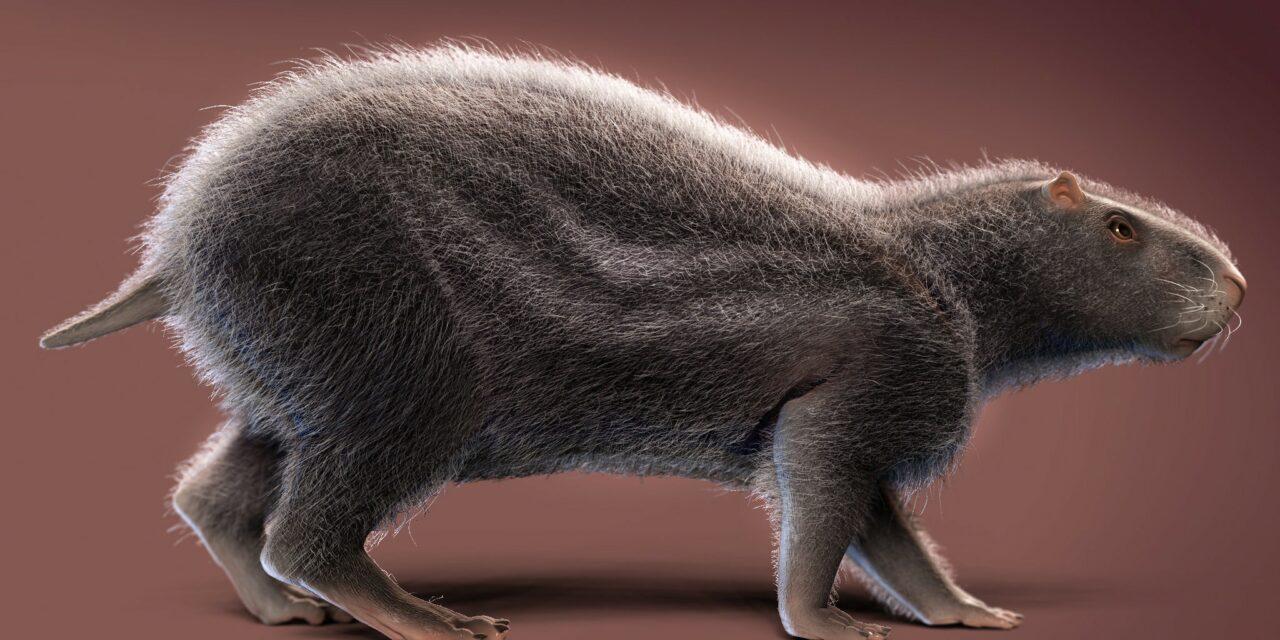 Una rata gigante prehistórica con un cerebro diminuto