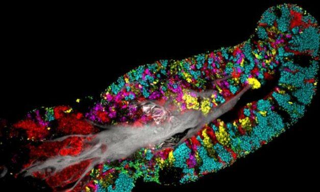 Así es como las bacterias construyen sus 'barrios' en tu lengua