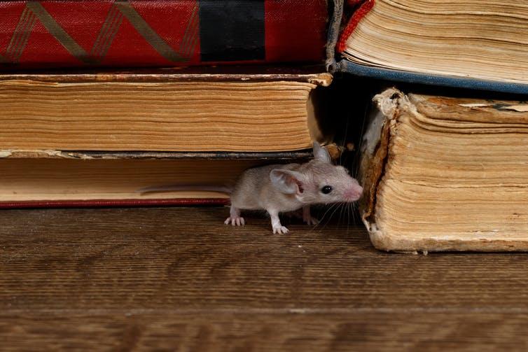 Pestes, plagas y otras calamidades en la literatura