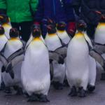 Así le afecta a los investigadores la caca de pingüino. Y no es para reírse