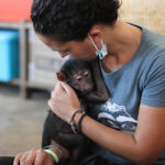 «El coronavirus puede acabar con los últimos grandes simios»