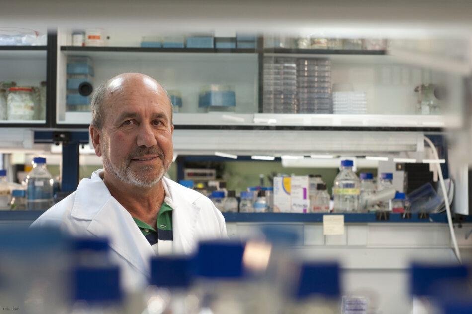 """""""Yo no me pondria una vacuna seguida de un desafio con el coronavirus SARS-CoV-2″"""