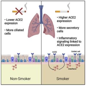 fumar aumenta riesgo coronavirus