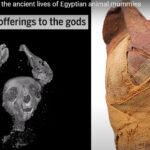 VíDEO: Imágenes en 3D revelan secretos de tres momias egipcias de animales