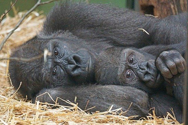 primates tacto