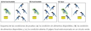 aves compartir comida
