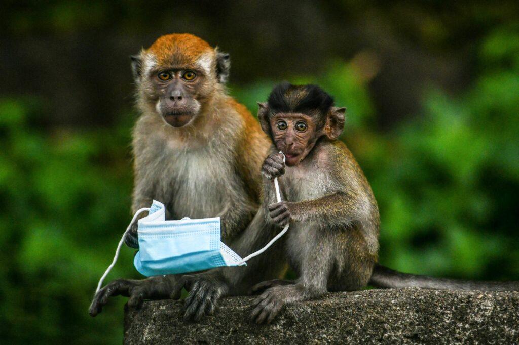monos en malasia