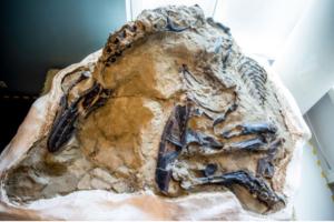 paleontología fósil dinosaurios