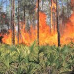 Las alertas por satélite que combaten la deforestación en todo el mundo