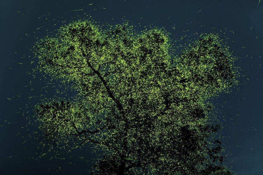 Luciérnagas, Foto de Prathamesh Ghadeka / The Nature Conservancy