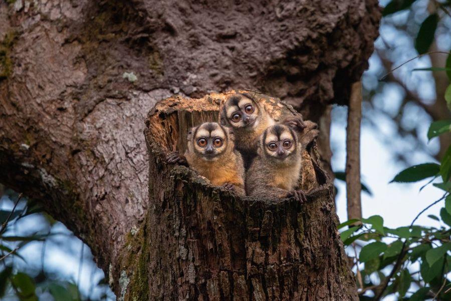 monos en un árbol